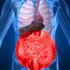 Crohn's Disease and Intestinal Bacteria